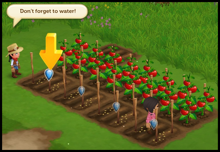Tomatoes need to be watered in farmville
